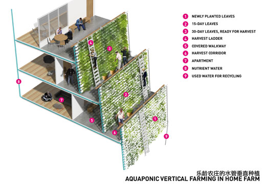 aquaponic vertical farming in Home Farm