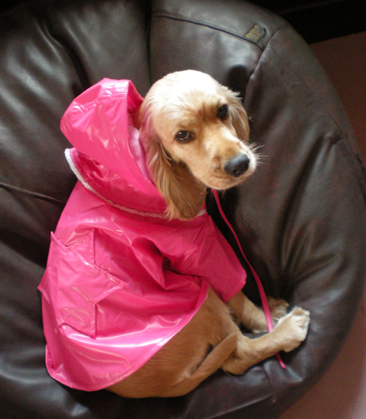 raincoats for dogs from sonya vajifdar