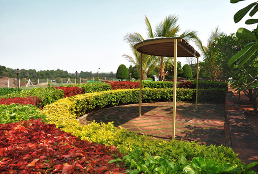 ornamental plants in soft landscaping