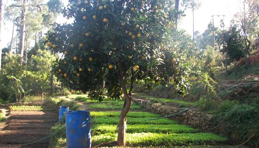 avani farm in kumaon himalayas