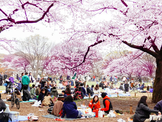 Hanami at Yoyogi Park 2013
