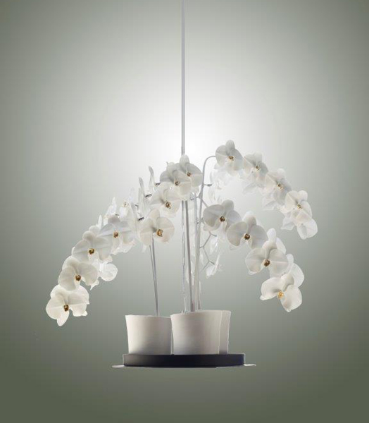 Phalaenopsis Chandelier - Jeremy-Cole