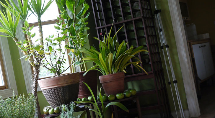 """get creative with indoor plants indiaartndesign"""