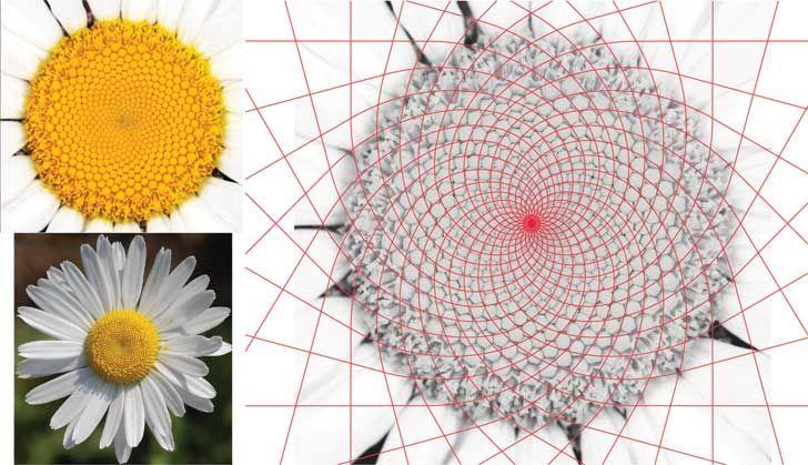 """Design evolution from Fibonacci series Kannauj Perfume Park and Museum Studio Symbiosis indiaartndesign"""